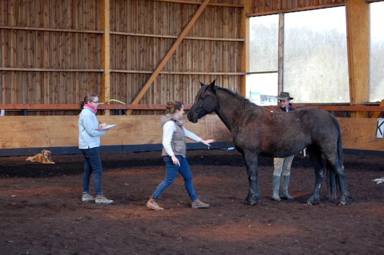 1er temps : observation du cheval