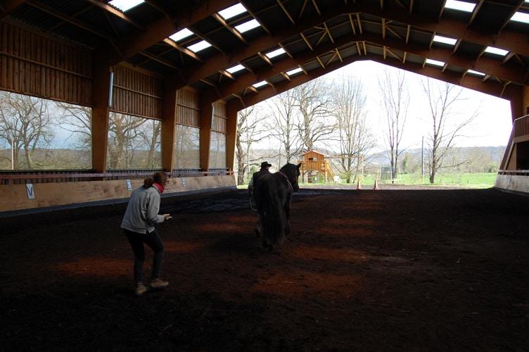 3ème temps : un aller au pas en ligne droite avec observations de la locomotion du cheval