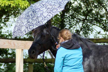 Cavalière apprenant à dresser son cheval