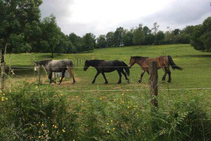 Des chevaux en pension au Haras Alegria
