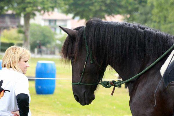 Un cours collectif d'équitation éthologique avec la Relation de Complicité®