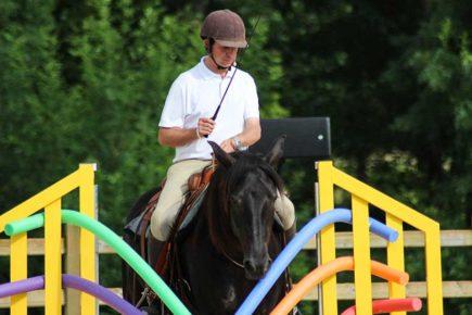 Travail du cheval en cordelette