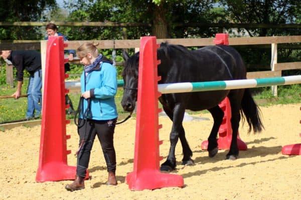 Un maxi-cours d'équitation éthologique à Alegria