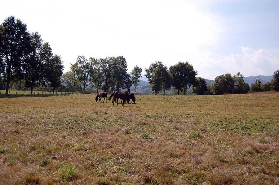 Les prairies de la pension loisirs