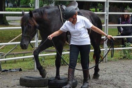 Passage de pneus lors d'un stage d'équitation éthologique Relation de Complicité®