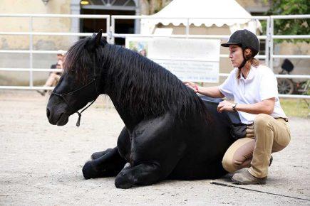 Education du cheval à la Relation de Complicité®