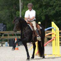 Au niveau Centaure le cheval peut être dirigé en cordelette avec des aides très fines