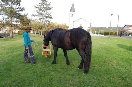 """Apprendre à votre cheval à ne plus avoir peur en utilisant le mot """"Touche"""""""