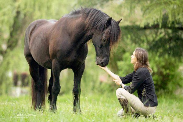 Comment faire pour que mon cheval m'aime ?