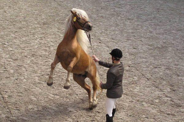 Que faire face à un cheval qui se cabre