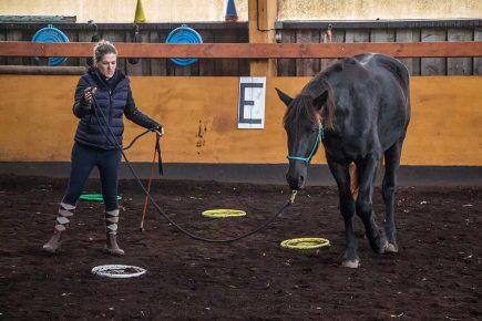 Obtenir le contrôle des pieds du cheval
