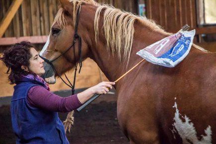 Habituer son cheval à divers stimuli