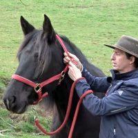 Attraper facilement son cheval au pré