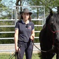 Identifier les signes de stress chez le cheval