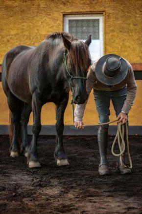 Apprendre au cheval à céder à la pression en utilisant les principes d'apprentissage