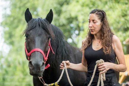 Education du cheval de manière éthologique
