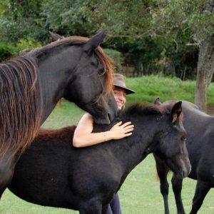 Les chevaux et poulains du troupeau